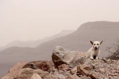 Gebirgshund