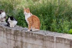 Katzenmauer