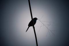 fürs Nest