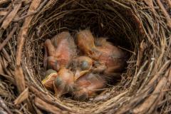 im Nest 1