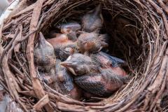 im Nest 2